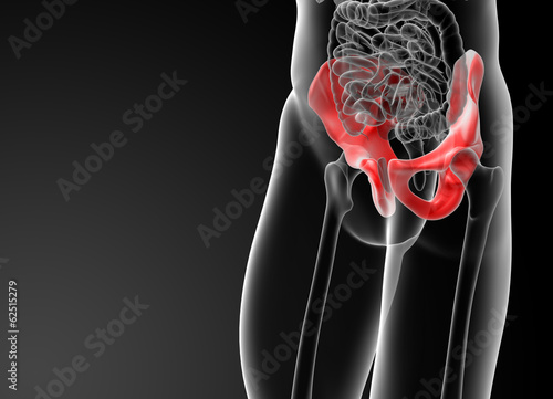 3d render illustration pelvis bone - side view