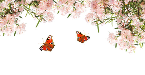 Pink flowers and butterflies