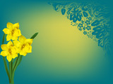 yellow narcissus flowers on blue background