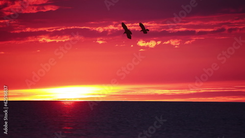 Sunset over Sea and Birds