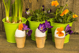 Spring flowers decoration