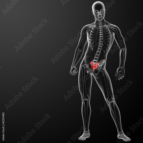 3d render illustration sacrum bone - front view