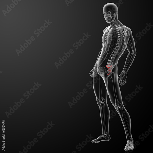 3d render illustration sacrum bone - side view