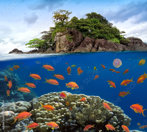 Photo of a coral colony on a reef top