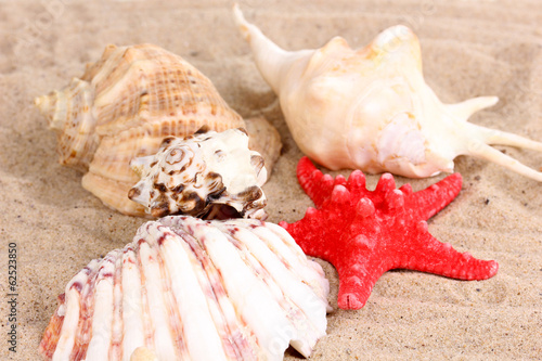 Seashells and starfish on sand close-up