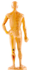 mannequin médecine chinoise, vue de dos