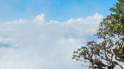 Tree on background of clouds. View from top of mountain. Thailan