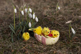 Easter chick and decoration on green grass