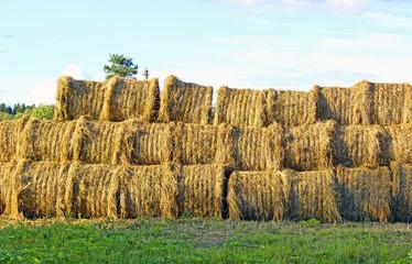 Haystacks on the farm