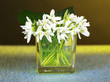 Beautiful snowdrops in vase, on color background
