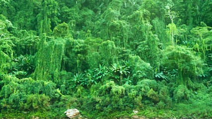 Tropical vegetation. Panorama of jungle in Laos