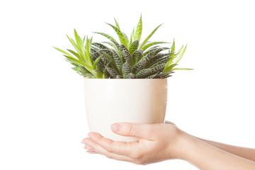 Human hands holding a flower