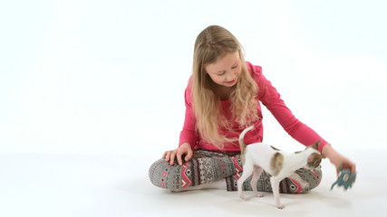 young chihuahua dog