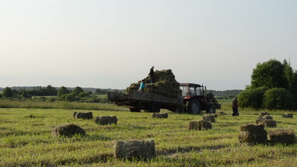 Tractor in field and farmer people load it with hay bales