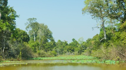 Pond, overgrown with vegetation