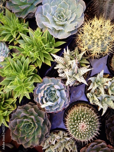 Foto op Canvas Cactus Selection of interesting succulent plants at the market.
