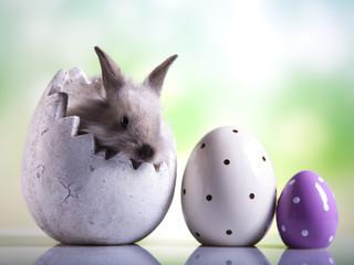 Easter animal, bunny