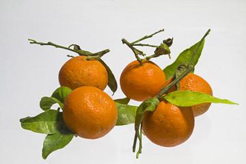 Mandarinenfrüchte