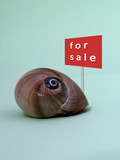 snail shell for sale
