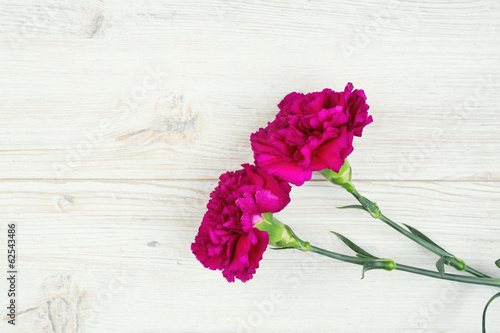 purple cloves isolated on white
