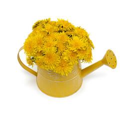 dandelions in a watering can