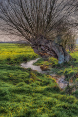 Old decaying tree next to a stream