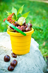 bucket of chestnuts and rowan