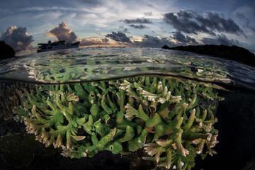 Solomon Islands Coral Reef