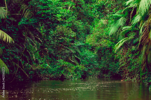 River deep in jungle forest. Amazonas composition.