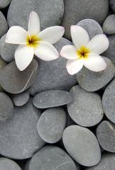 White frangipani flowers on gray pebbles © naluwan