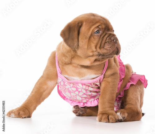 female puppy