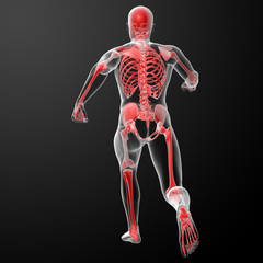 Running skeleton by X-rays in red - back view