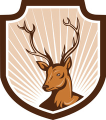 Deer Stag Buck Antler Head Shield