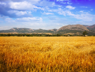 Fields at mountain valley. Lleida