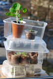 Mini greenhouses for balcony gardening