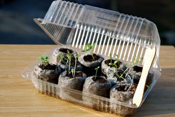 Mini greenhouse for balcony gardening
