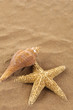 starfish with sea shells in the beach sand