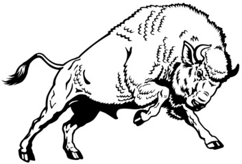 europen bison black white