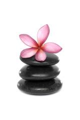 pink frangipani on zen stones