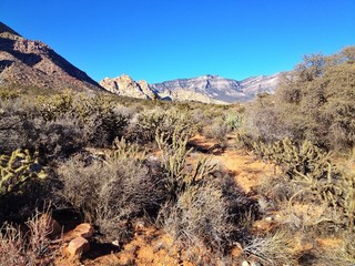 Mitten im Red Rock Canyon bei Las Vegas