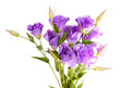 Purple artificial eustoma  isolated on white