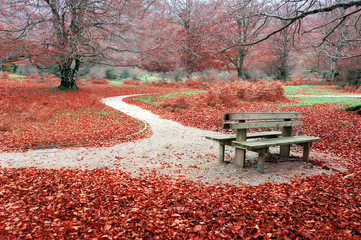 bench on autum