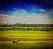 Spring summer green field scenery lanscape with horse