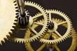 Gears mechanism, macro view