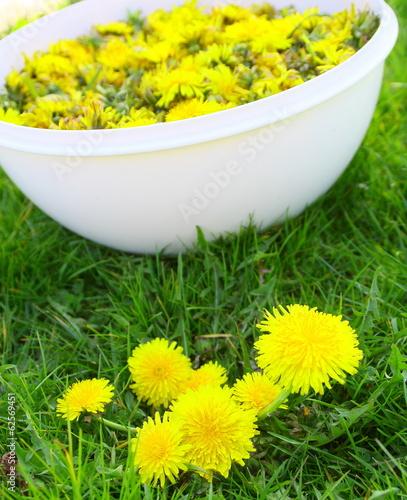 Fotobehang Paardebloem récolte,cueillette de pissenlit pour confiture de saison