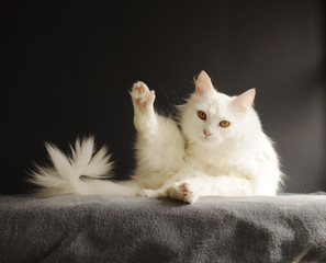 Cat in a funny pose