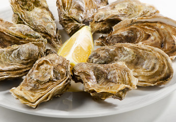 Fresh oysters on a white plate