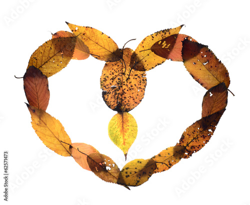 cherry leaf  love shape