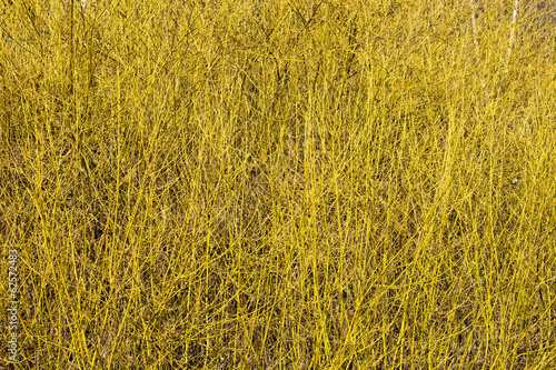 yellow shrub in wood
