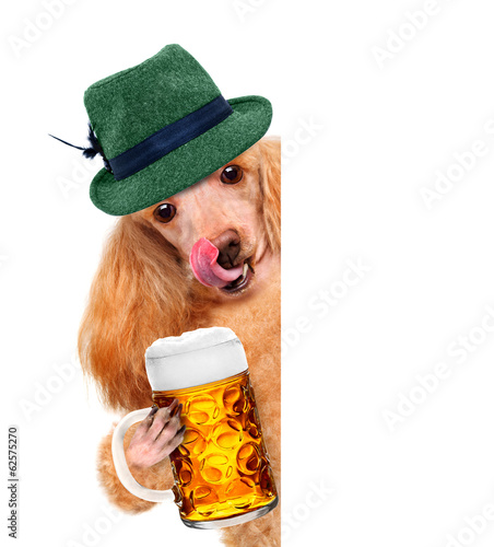 Dog with a beer mug, smiling happy behind a placard